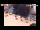 Пакистана расколол головой 155 орехов за минуту