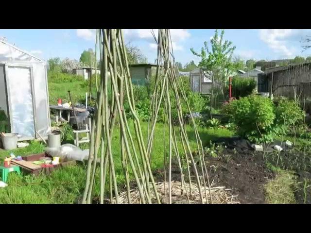 Опора - пирамида для фасоли Beanpole