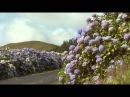 Азорские острова. Часть 3 Фауна, люди, образ жизни