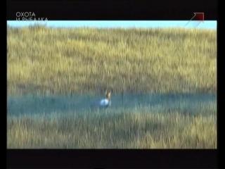На вилорогую антилопу |5| Охота в новом свете