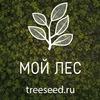 МойЛес | семена деревьев