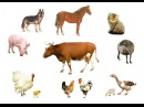 Домашние животные. Учим слова. Для детей 1-3 года. Развивающий мультик для самых маленьких детей.