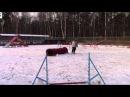 Гай и Антоша и Луна новогодние соревнования по аджилити 02.01.15