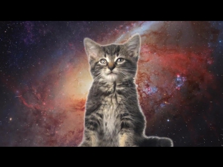 (Enjoykin) Space Cats — Magic Fly