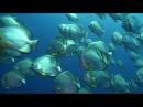 Рас Мохаммед Подводный мир Ras Mohammed Шарм-Эль-Шейх Египет
