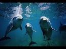 Дельфины в oкeaнe (♪ Альберт Артемьев♫)