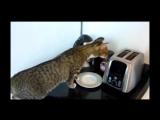 Видео приколы про кошек! Смейтесь до слез! Смотреть до конца!
