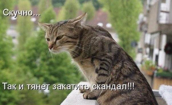 http://cs629305.vk.me/v629305260/349c4/P_7-XjdNfSU.jpg