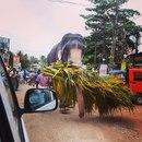 Роскошная Азия фото #1