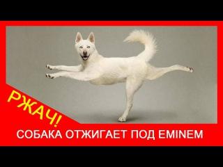 ★ Собака танцует под Eminem  Пес танцует под музыку, приколы с животными  Ржач