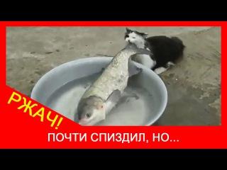★ Кошка рыбак! Кот украл рыбу, беспалева. Видео кошки до слез!
