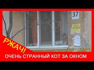 ★ Прикол с котом! Странный сиамский кот за окном. Ржачные кошки!