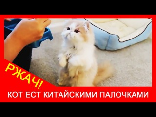 ★ Приколы про котов! УБОЙНАЯ подборка, нарезка про кошек