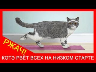 ★ Кот и спорт! Чёрный котёнок спортсмен по бегу. Приколы про кошек. Ржач!