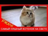 ★ Милый котёнок играет! Самый няшный котик в мире. Коты жгут. Ржач!