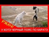 ★ Жестокая драка котов до смерти! Приколы с животными до слез.  Ржач!
