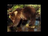 Медвежии