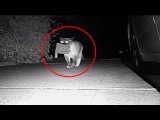 Кот-ворюга: преступный гений кошачьего мира попался!
