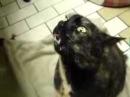 Этот кот умеет вызывать нечистую силу! Разговор кота с дьяволом.