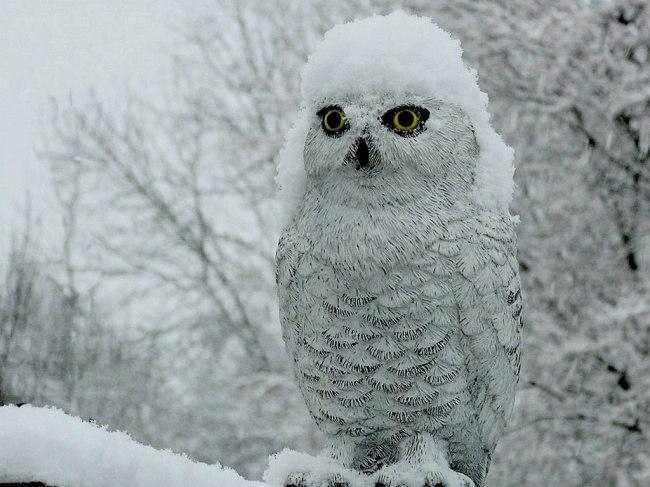 Wi JLXOcAh0 - 19 Домашних питомцев, которым не страшна зима.