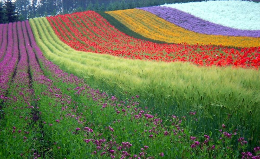 8nNWsll1zng - 20 мест, где природа не пожалела цветов