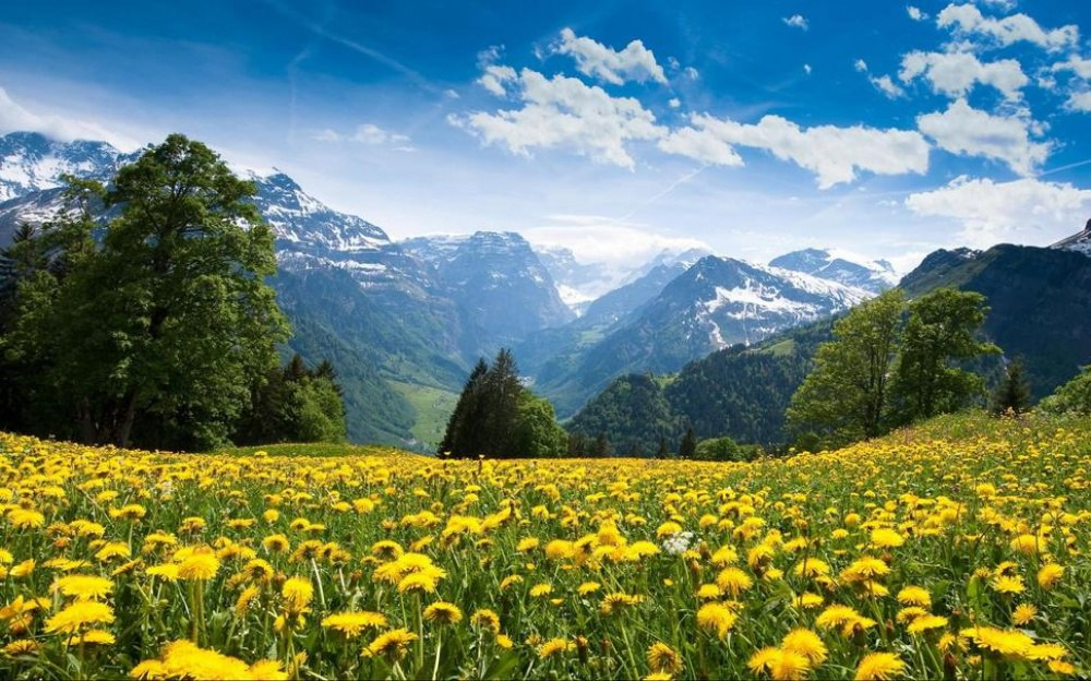8qJcRjeEkO8 - 20 мест, где природа не пожалела цветов
