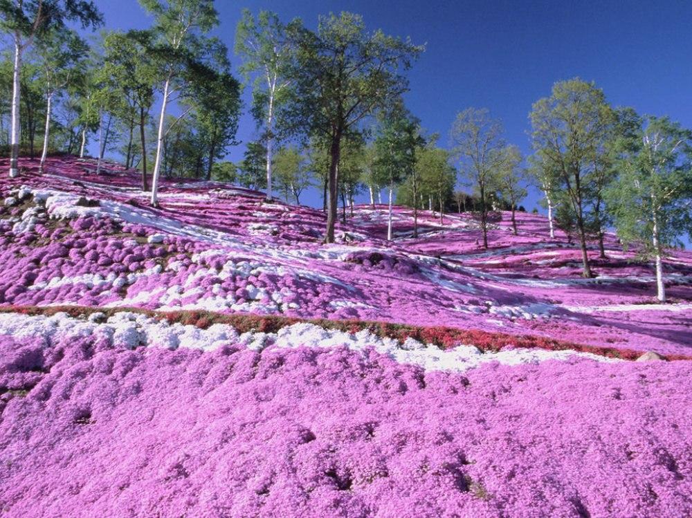 pezke9lLjs4 - 20 мест, где природа не пожалела цветов