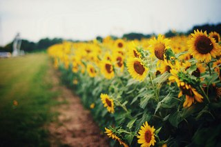 идеи для сада и огорода своими руками с фото