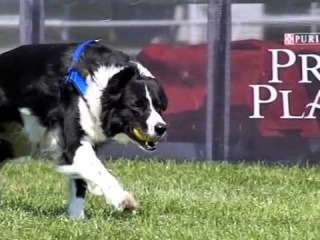Czech FLYBALL Championship 2014 SLOW MOTION MOVIE by DogSports.cz