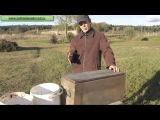 Стратификация семян и косточек