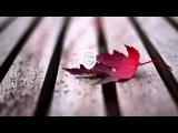 Steezefield - You (Prod. LuQus)