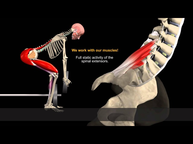 Muscle Motion Lifting Injury Risk