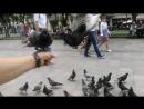 Борзие голуби во Львове