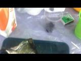 рыбу жарим