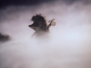 | ☭☭☭ Советский мультфильм | Ежик в тумане | 1975 |