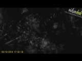 Video Shok №155 :: Я есть Грут.