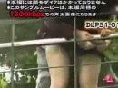 Розыгрыши в Японии. Парни заставляют девушек снимать трусики.
