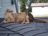 Кот и белка нашли друг друга
