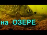 ПОПЛАВОК, поклевка под водой.На озере.underwater. Рыбалка, ловля карася,... fishing