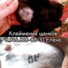 Клеймение щенков в Москве и МО 89168180831 Елена