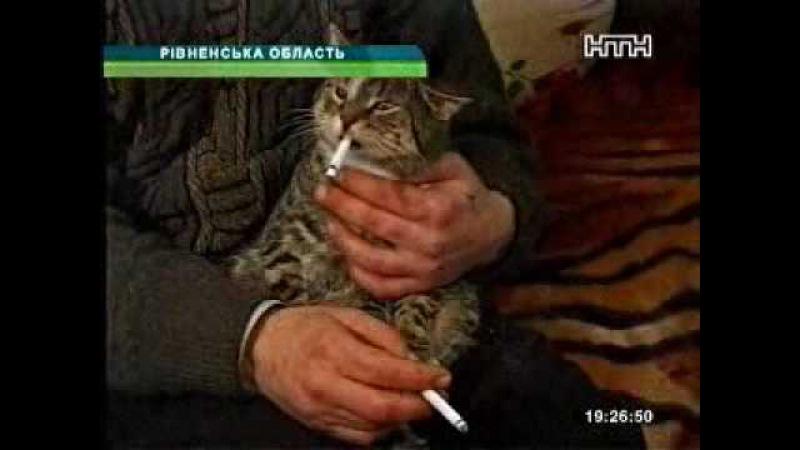 Курящий кот