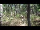 US Marine Brent Downing Good Camouflage - Can YOU spot the camouflaged Marine in this video?