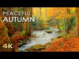 4K Autumn Forest - Relaxing Nature Video &amp River Sounds - NO MUSIC - 1 hour Ultra HD 2160p