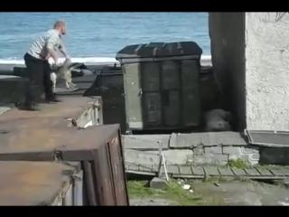 Человек бросает медведю живую собаку. Мыс Шмидта, Чукотка. 2011 год.
