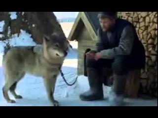 Весьегонская волчица Худ фильм