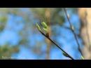 Георг Фридрих Гендель Музыка на воде Соната №1 До минор Adagio.G. F. Handel Suite № 1 C minor