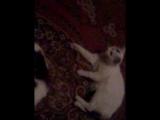 Бешеная кошка)))