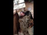 Видео с летучей мышью