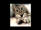 «• Открытки vk.com/fotomimi» под музыку Егор Крид - Ты буди-буди, пока крутишь бигуди.. Picrolla