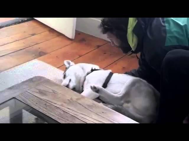 Мужик будит собаку